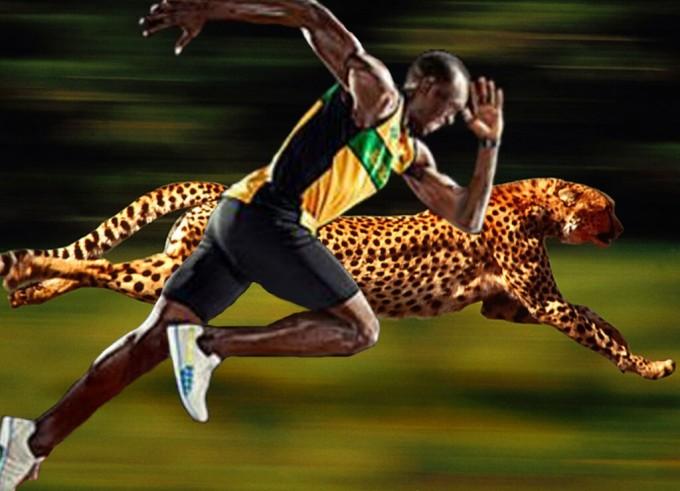 usain-bolt-trka-gepard-svetski-rekord-e1440689719568